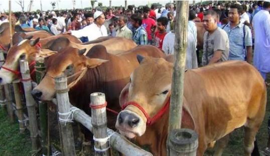 স্বাস্থ্যবিধি মেনে সারাদেশে বসবে কোরবানির পশুর হাট