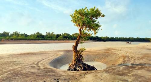 প্রকৃতির আরেক দিগন্ত পর্যটন পল্লী গঙ্গামতি সৈকত